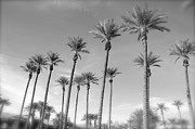 Tina Hannaford - Palms