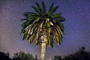 Palmtree In Alentejo Print by Andre Goncalves