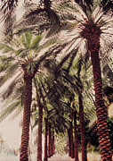 Blurry Painting Prints - Palmtree Print by Jeanette Korab