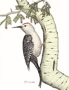 Gila Woodpecker Framed Prints - Palo and Peck Framed Print by Julie Stubbs