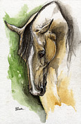 Horse Drawing Painting Prints - Palomino Arabian Horse Watercolor Portrait 1  Print by Angel  Tarantella