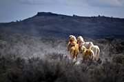Forelock Photo Posters - Palomino Buttes Band D1482 Poster by Wes and Dotty Weber