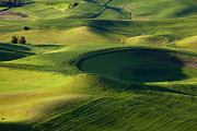 Crop Lines Art - Palouse Curves by Mike  Dawson
