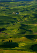 Furrows Framed Prints - Palouse Green Framed Print by Mike  Dawson