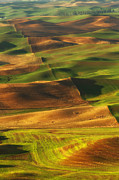 Wheatfields Photo Prints - Palouse Morning Print by Reflective Moments  Photography and Digital Art Images