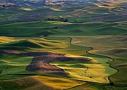 Furrows Framed Prints - Palouse Shadows Framed Print by Mike  Dawson