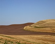 Doug Fredericks - Palouse Suede