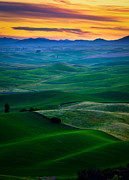 Green Hill Farm Posters - Palouse Velvet Poster by Inge Johnsson
