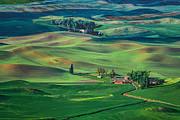 Palouse - Washington - Farms - #4 Print by Nikolyn McDonald