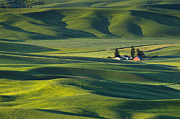 Greg Vaughn - Palouse Wheat Fields