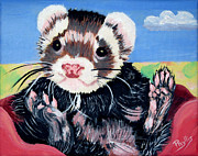 Ferret Framed Prints - Pampered Ferret Framed Print by Phyllis Kaltenbach