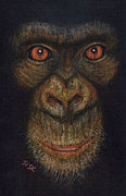 Primates Originals - Pan Troglodytes by Rebekah Sisk