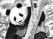 Brian Gilna - Panda 02