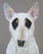 English Bull Terrier Framed Prints - Panda Framed Print by Joanne Simpson