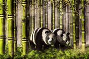 Daniel Eskridge - Pandas in a Bamboo Forest