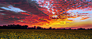 Helen Akerstrom Photography - Pano Sunset Canola