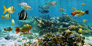 Undersea Prints - Panorama in a coral reef with shoal of fish Print by Vilainecrevette