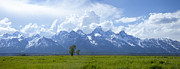 Dan Thornberg Acrylic Prints - Panorama of Grand Teton mountain range in Wyoming Acrylic Print by Dan Thornberg