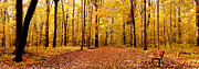Sports Pyrography Acrylic Prints - Panoramic Golden Forest Acrylic Print by Boon Mee