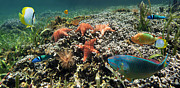 Under Water Prints - Panoramic view on a coral reef with starfish Print by Vilainecrevette