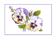 Joan A Hamilton - Pansies for Ree