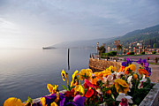 Pansies Framed Prints - Pansies on Lake Maggiore Framed Print by Peter Tellone