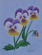 Hardy Pastels - Pansies by Sally Rice