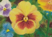 Rebecca Prough - Pansy and Friends