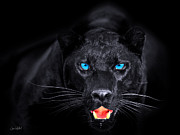 Panther Framed Prints - Panther Framed Print by Jean-Raphael Designs