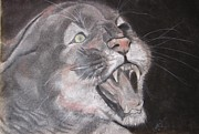 Panther Print by Rebecca Wiltfong Frisbee
