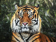 Panthera Photo Framed Prints - Panthera Tigris II Framed Print by Joachim G Pinkawa