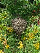 Garren Zanker - Paper Hornet Nest
