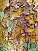 Pattern Digital Art Prints - Paperbark Maple Tree Print by Jessica Jenney