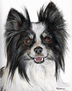 Miniature Pastels - Papillon Painting by Kate Sumners