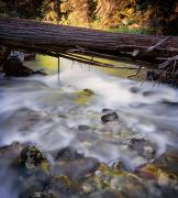 Papoose Creek Print by Leland D Howard