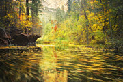 Oak Creek Canyon Prints - Parade of Autumn Print by Peter Coskun