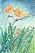 Paradise Drawings Posters - Paradise Flowers from Tenerife Poster by Eve-Ly Villberg