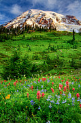 Mt Rainier National Park Prints - Paradise Print by Inge Johnsson