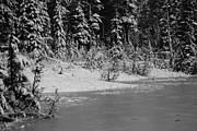 Marilyn Wilson - Paradise Meadows in Winter
