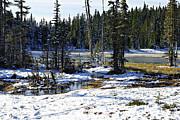 Marilyn Wilson - Paradise Meadows Pond in Winter