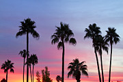 Palmtree Posters - Paradise Palm Tree Sunset Sky Poster by James Bo Insogna