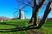 Boyd Prints - Paradise Park Windmill Print by Catherine Reusch  Daley