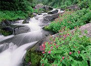 Mt Rainier Stream Framed Prints - Paradise River and Spring Wildflowers Framed Print by Tim Fitzharris