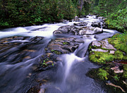 Mt Rainier Stream Framed Prints - Paradise River in Mt Rainier National Framed Print by Tim Fitzharris