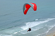 Beach Scenes Photos - Paragliding at Torrey Pines by Anna Lisa Yoder