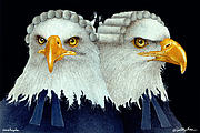 Eagle Painting Framed Prints - Paralegals... Framed Print by Will Bullas
