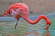 Suzanne Stout - Parched Flamingo