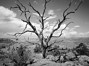 Dead Tree Prints - Paria Tree Last Stand Print by Rich Franco