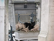 Chaise Photos - Paris Cemetery Cat - Le Chats Noir - Pere LaChaise - Black Cat On Grave Cemetery Art by Kathy Fornal