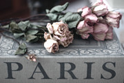 Floral Photos Photos - Paris Dried Pink Roses - Dreamy Romantic Roses - Memories of Paris by Kathy Fornal